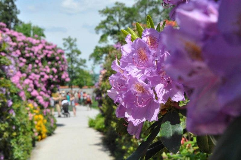 Insel Mainau Karte.Insel Mainau Die Blumeninsel Im Bodensee