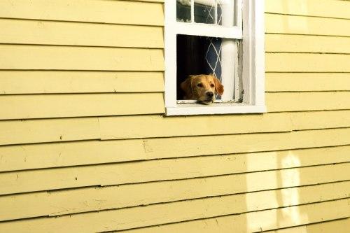Urlaub Mit Dem Hund Am Bodensee